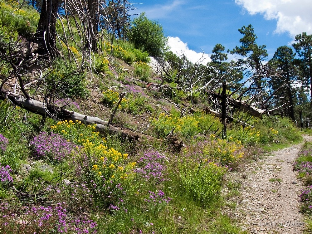 Wildflowers Hike ~ Mt. Lemmon, Catalina Mountains by Lucinda Walter