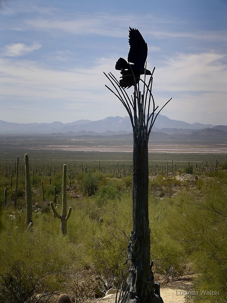 Raptor on Saguaro  by Lucinda Walter