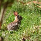 Some-bunny's looking for Beatrix Potter! by WalnutHill