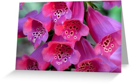 Sun-Kissed Foxglove, Wickedly Wonderful and Seductive by Jean Gregory  Evans
