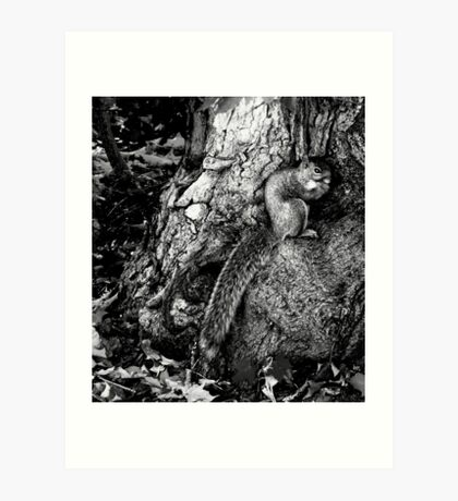 squirrel and the tree king Art Print