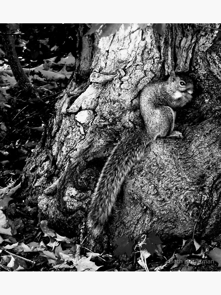 squirrel and the tree king by BBrightman