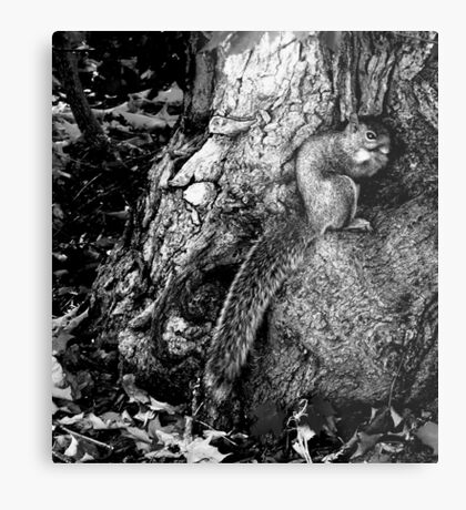 squirrel and the tree king Metal Print