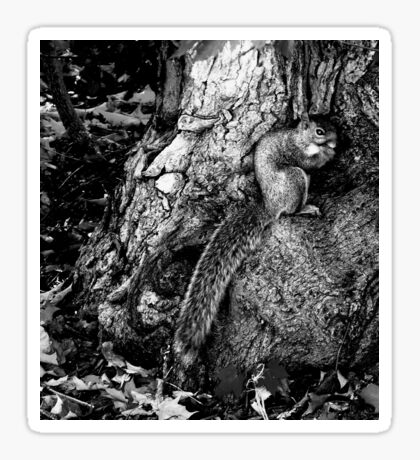 squirrel and the tree king Sticker