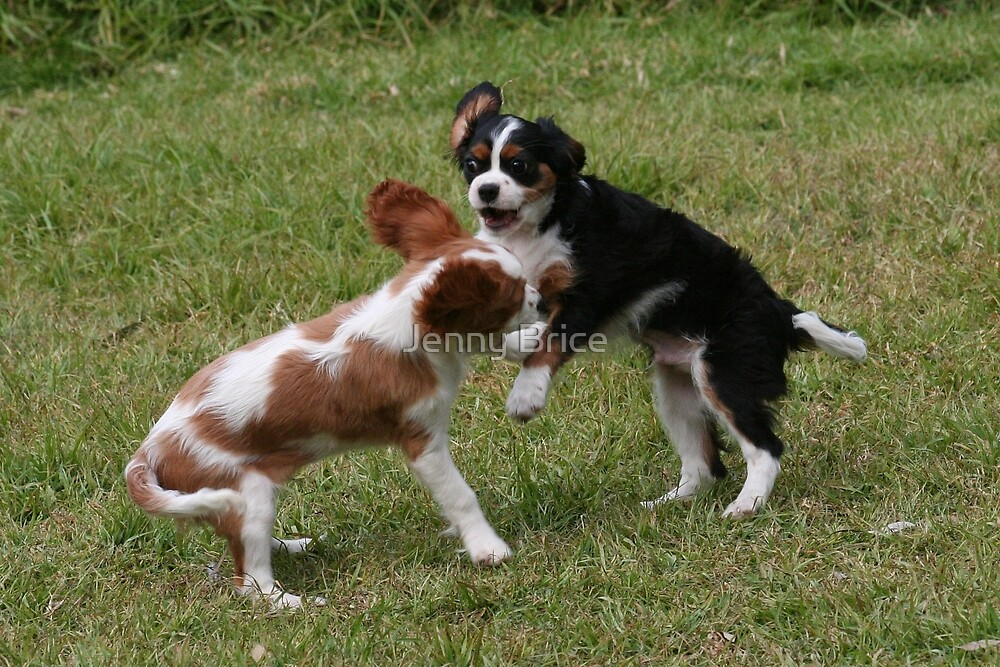 Puppies At Play by Jenny Brice
