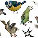 The Birds! by mikelevett
