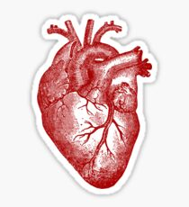 Vintage Heart Anatomy Sticker