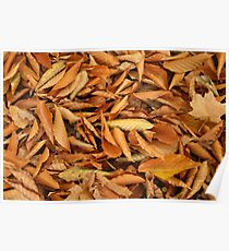 Orange Fall Leaves Poster