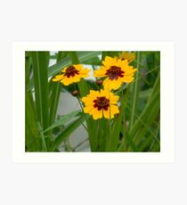 Plains Coreopsis With Buds Art Print