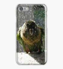 Shake, Rattle And Roll - Maroon-Bellied Conure NZ iPhone Case/Skin
