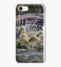 Greylag geese feeding goslings iPhone Case/Skin