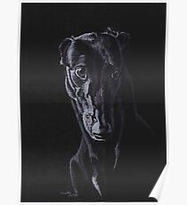Black Greyhound Silhouette Colored pencil Drawing Poster