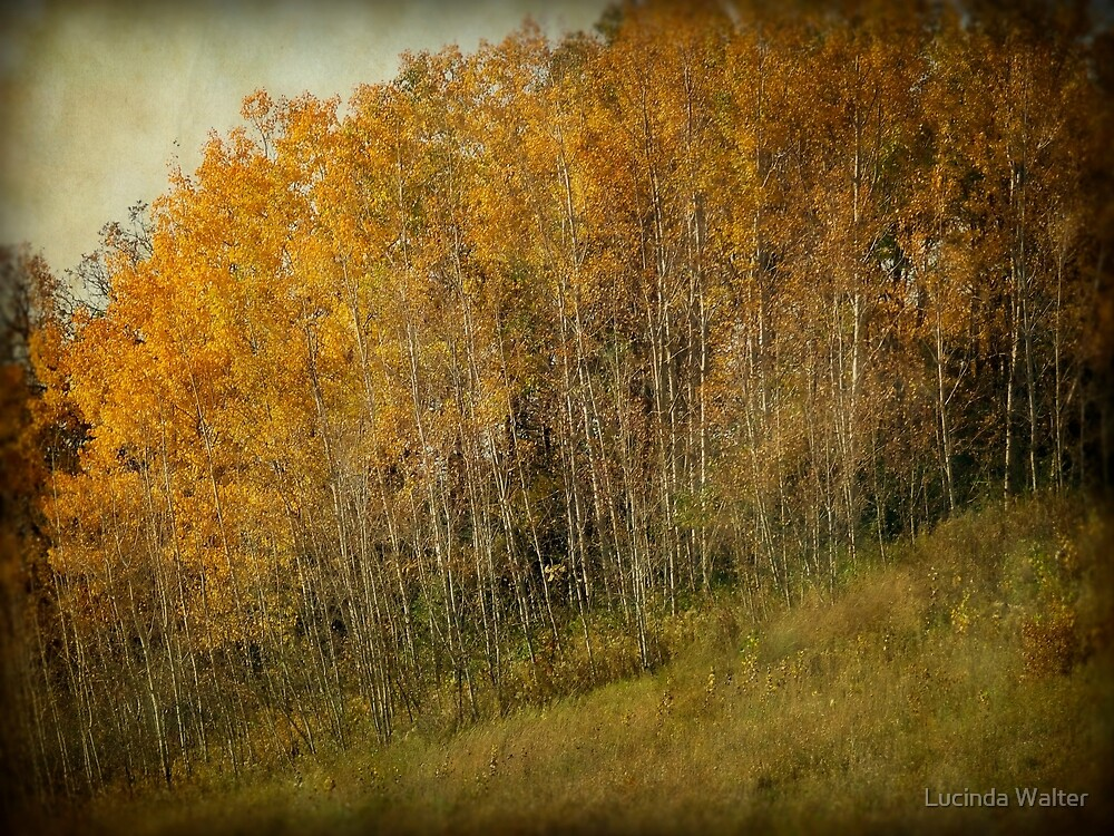 Fall Glory by Lucinda Walter