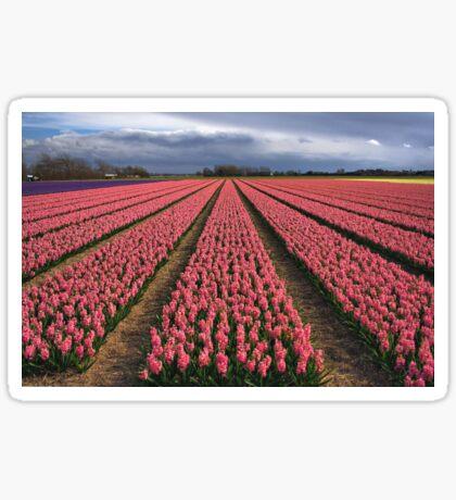 Pink Hyacinth Field Sticker