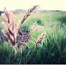 Summer morning by Zozzy-zebra