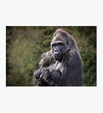 Gorilla portrait Photographic Print