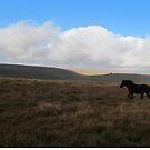 Dartmoor pony by Zozzy-zebra