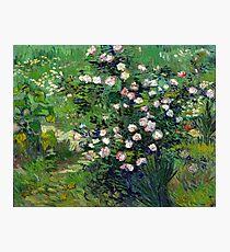 Vincent van Gogh Roses Photographic Print