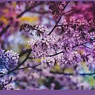 Purple Spring Blossoms - Photograph by pixelspin