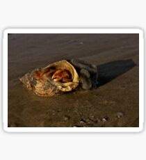 Hermit Crab on Fahan Beach Sticker
