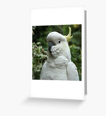 Cocky Greeting Card