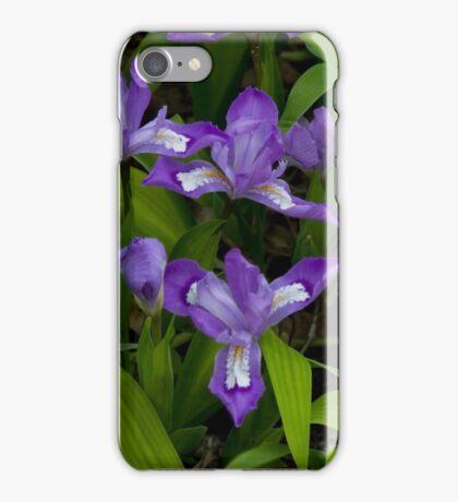Dwarf Crested Iris iPhone Case/Skin
