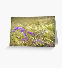Cornfield. Golden husks blowing in the wind Greeting Card