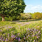 Swaying bluebells on a Spring day  by Victoria Ashman