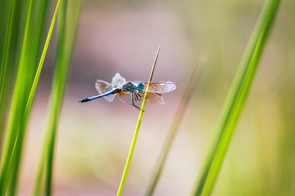 Dragonfly by Pond #1  by Seth Bowman