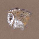 Barn Owl Sketch by NearBird