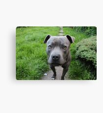A Cute Dog Outdoors Canvas Print