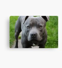 A Dog Outdoors Canvas Print
