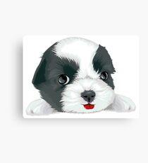Bolognese dog Canvas Print