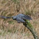 Cuckoo flight by M S Photography/Art
