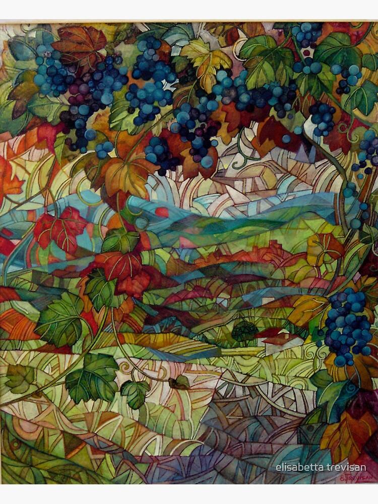 the vineyard by betta