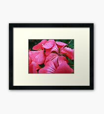 Flowers and drops Framed Print