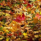 Fallen Leaves by Lucinda Walter