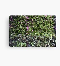 Green wall with pink flowers. Canvas Print