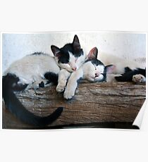 Cute kittens sleeping Poster