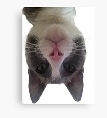 Crazy Gracie Upside Down Kitty Canvas Print