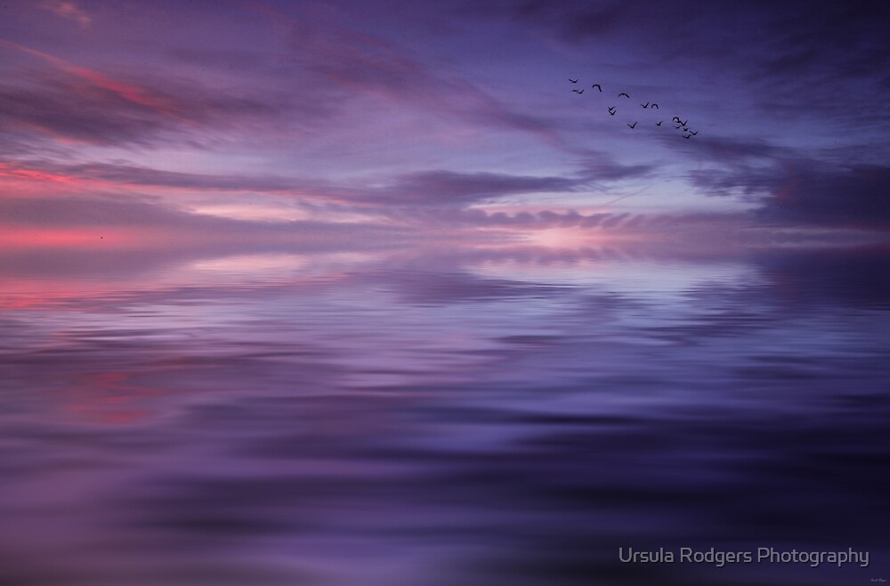 Dusk Flight by Ursula Rodgers Photography