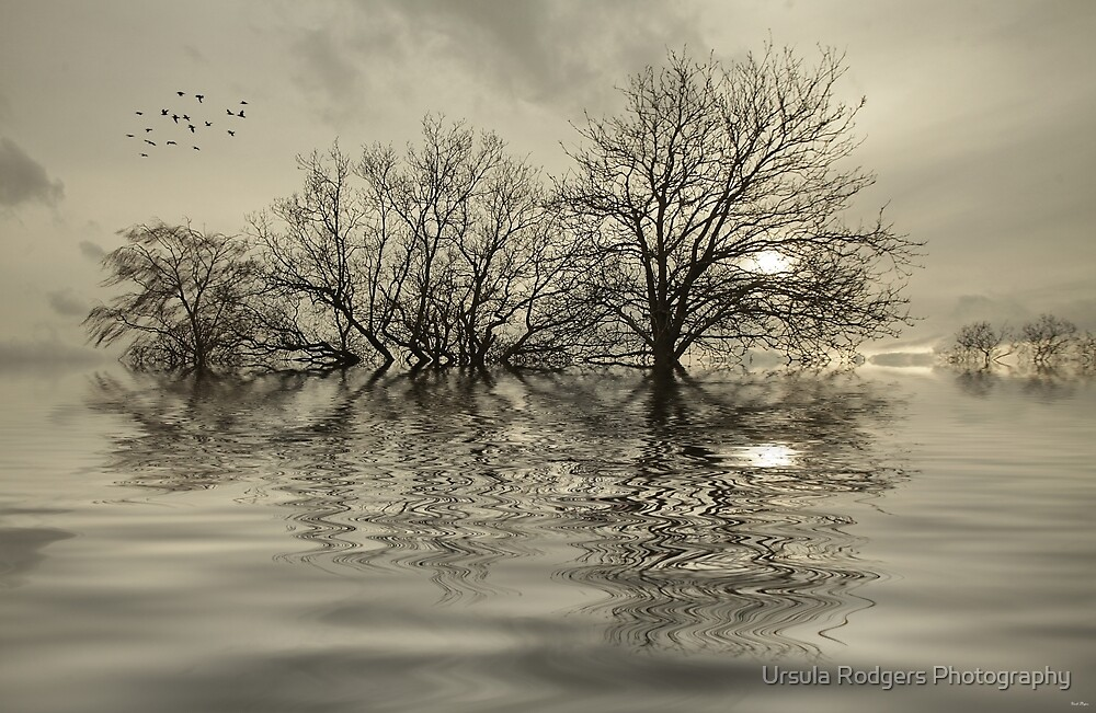 Haven by Ursula Rodgers Photography