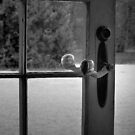 To the Outside World by Lucinda Walter