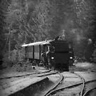 The 658 Coming Down the Tracks by Lucinda Walter
