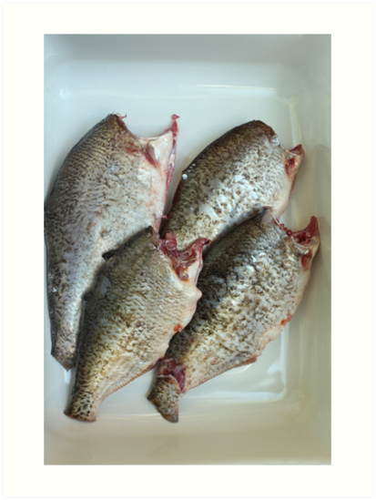 fresh gutted fish  by mrivserg