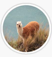 """HUH?"" Confused Llama - Comical Animals Sticker"