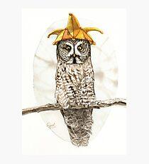 Strange Great Gray Owl Photographic Print