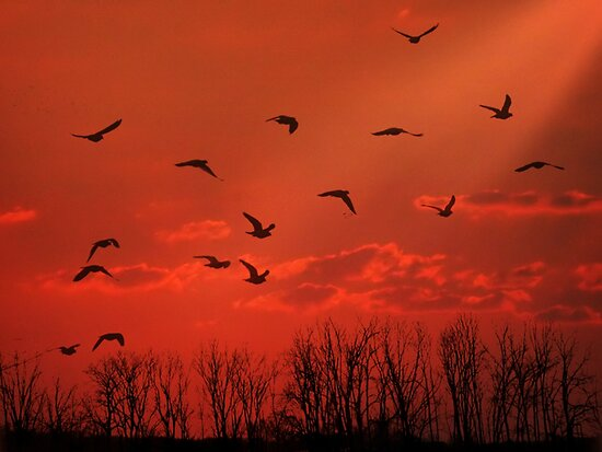 Fly Away Home by Maria  Gonzalez