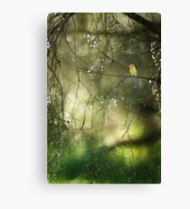 bee-eater in dreamland Canvas Print