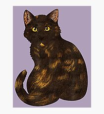 Tortie Cat Photographic Print